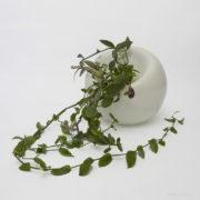 Bulb+plant