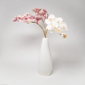 Slender Carpel+ flower