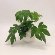 Spore planter large