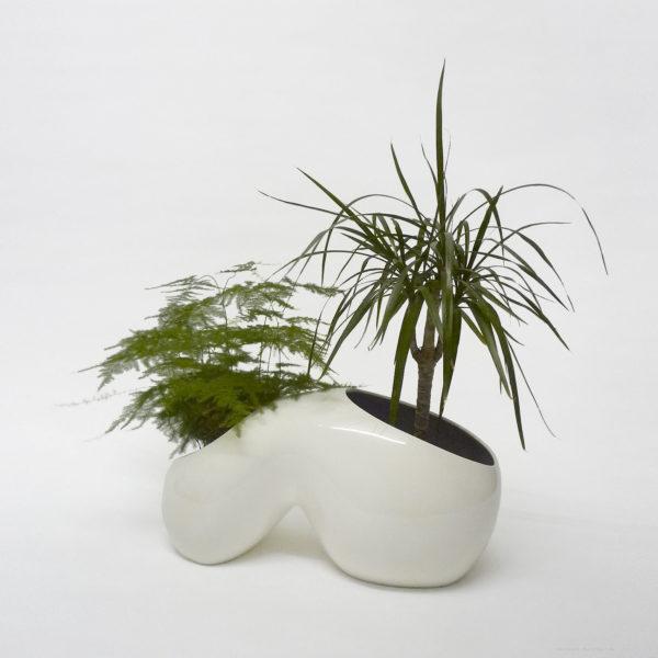 organismus+plants